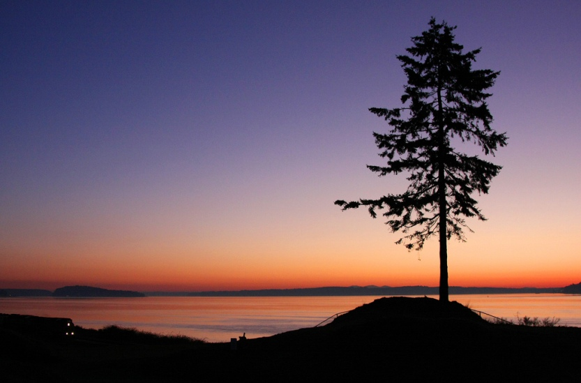 The Lone Fir at Chambers Bay
